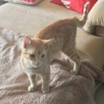 Franziska, Katze, geb. ca. 01/2018, geimpft und gechipt