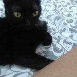 Mia, Katze, geb. ca. 2016, kastriert, geimpft und gechipt