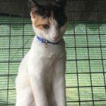 Notfall Lisa, Katze, geb. ca. 04/05-2018, geimpft und gechipt