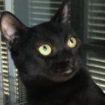 Franzi, Katze, geb. ca. 02/2018, bei Ausreise kastriert, geimpft und gechipt