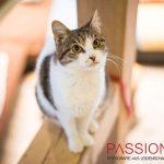 Katzen auf PS Nähe Marburg suchen ein zuhause