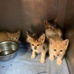 Kitten aus Mallorca