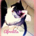 Afrodita, ein Herzenskätzchen