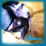 Atenea, ein Kätzchen mit Charakter