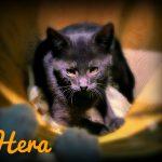 Hera, Black Pearl