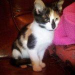 Kitten geb. 9/19 auf PS in Wohra Gemünden