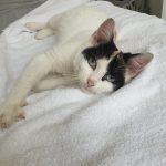 Katze Lili , geb. ca. Mitte 2018