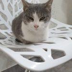 Katze Missy, geb. ca. 2/19