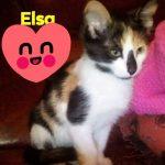 Kitte Elsa, geb. ca. 8/19 Handicap