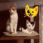 Kitten Flinn und Heidi , geb. ca 9/19