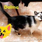 Katze Dalma, geb. ca. 12/18