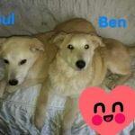 Welpe Ben und Paul werden auch getrennt vermittelt