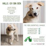 Ben lebt bei einer Pflegestelle in Hessen