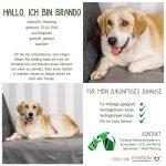 Rüde Brando auf PS in Hessen