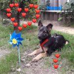 Welpe Nessa möchte Rumänien ganz schnell verlassen