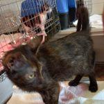 Kitte Schildpatt sucht ein Zuhause