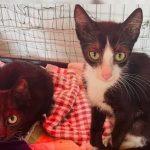 Kitte Flummi sucht ein Zuhause